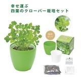 四つ葉のクローバー栽培セットプチ / ギフト ノベルティ グッズ
