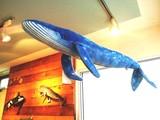 シロナガスクジラのぬいぐるみ