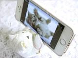 【かわいい動物シリーズ】スマートフォンスタンド ネコ