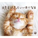 【音楽CD】[Amazonレビュー評価高]明日はきっといい日になる 癒し雑貨 CD  ヒーリング