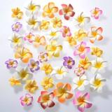 Frangipani Sponge Artificial Flower Mix 50 Pcs Set