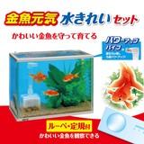 【観賞魚水槽】金魚元気水きれいセット