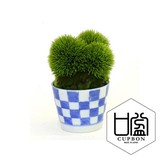 Marimo Soba Choko Checkered Arabesque Tokusa Cup Artificial Plants