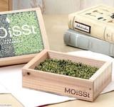 【Collection Catalog】モイスト モス コケ 苔 スナゴケ プレゼント ギフト 観葉植物