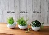 Pottery White Dot Series Artificial Plants