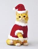 【創業祭セール!】【クリスマス】【Xmasキャット】Mサイズ ネコ雑貨