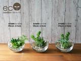 【eostone】ガラスボール 多肉植物ミックス/エコストーン【フェイクグリーン/artificial plants】
