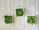 Frame Wall Deco Series Artificial Plants