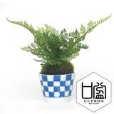 シノブ/ そばちょこ(市 松)(波唐草)(点十草)【カップボン】【フェイクグリーン/artificial plants】