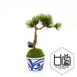 Soba Choko Arabesque Tokusa Cup Artificial Plants