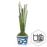 トクサ/そばちょこ(市 松)(波唐草)(点十草)【カップボン】【フェイクグリーン/artificial plants】