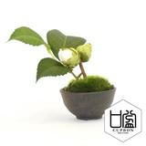 椿つぼみ/ぐいのみ(黒錆)【カップボン】【フェイクグリーン/artificial plants】