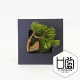 松・吹き流しS/ウォールデコ【カップボン】【フェイクグリーン/artificial plants】