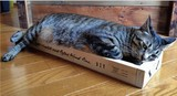 Cat scratching box handmade kit