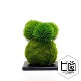 マリモ/苔玉(黒皿)【カップボン】【フェイクグリーン/artificial plants】