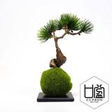松・吹き流しS/苔玉(黒皿)【カップボン】【フェイクグリーン/artificial plants】