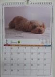 A4壁掛けハンガー付カレンダー DOG
