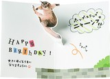 Animal Pop Card Cat