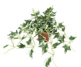フェイクグリーン ポーランドアイビー【光触媒加工】【造花】【インテリアグリーン】【パキラ】