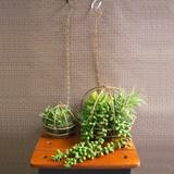 お部屋をグッと華やかに枯れない植物で作る手軽な癒し空間【サキュレントワイヤーボール・S/L】