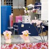サクラ満開装飾セット 5種11点セット イベント 春