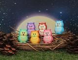 IWAKO Owl