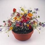 【30数種類の花の種をブレンド♪】春〜秋まで楽しめる花の種!フラワリーランド 1パック