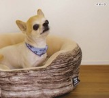 PAW-PAW WOODY PET BED