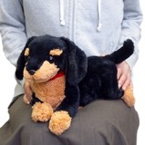 Dog Miniature Dachshund