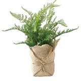 DECOR IMITATION FERN B IN BAG