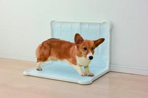 Pet Product Toilet Sanitation Sheet Tray Double Wide