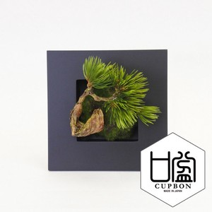 Sink Wall Deco Cup Interior Plant