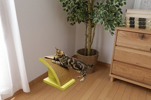 Pet Product Cat Arch Type