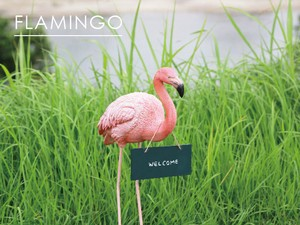 Popular Real Animal Message Bird Flamingo