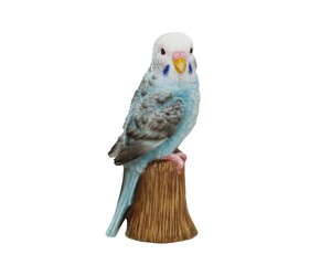 Solid Objects Parakeet Small Birds Objects