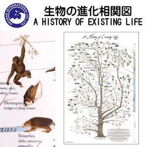 ■2018SS 新作■ グラフィック A HISTORY OF EXISTING LIFE