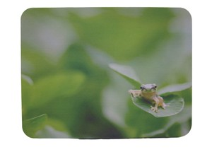 Mouse Pad Frog