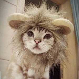 Pet Product LION LION Headgear