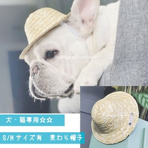 for Cat Straw Hat